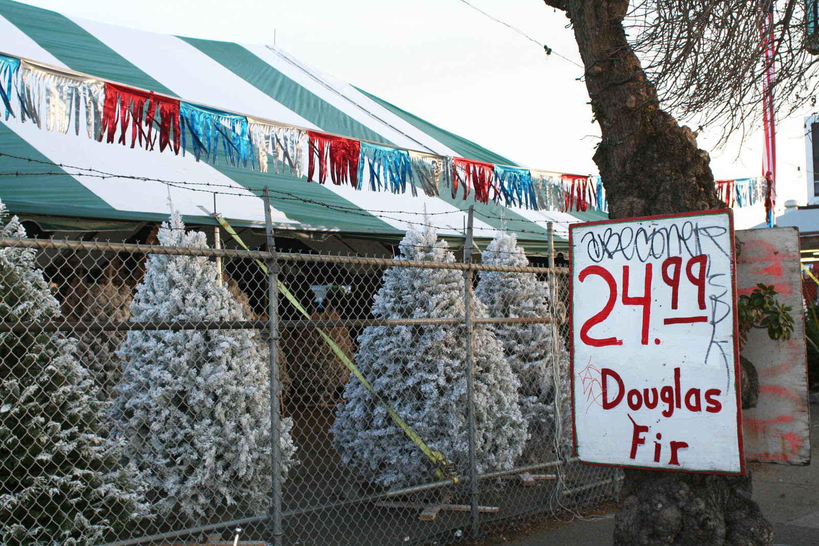 Bab's Christmas Trees has been drawing customers to 23rd Street since 1981.