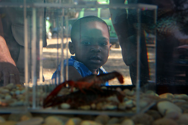 Young boy looks at crawfish